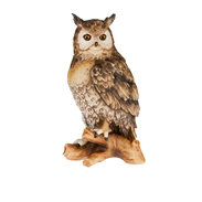 Owl on perch