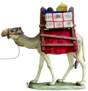 Dromedary with pack